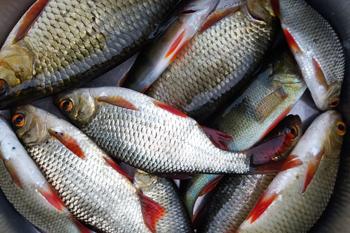 Рыбалка в Латгалии